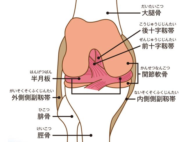 痛い 足 の 付け根 内側