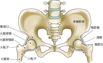 堀田 拓 先生|歳と共にすり減ってくる軟骨|第42回 股関節や膝に痛みを ...